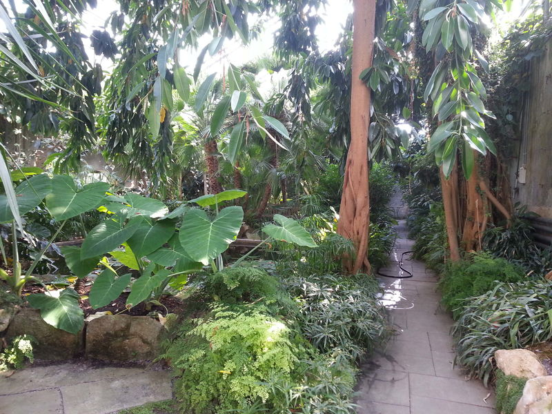 Palmenhaus Innenansicht rechts