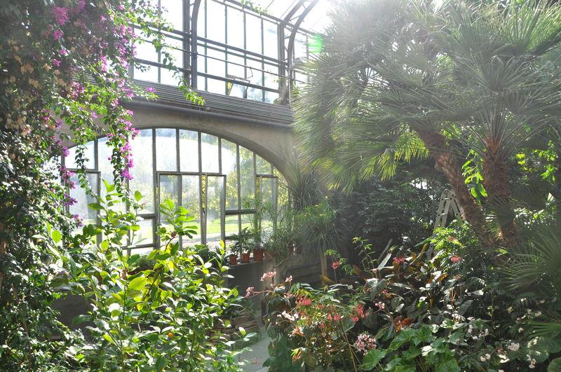 Innenansicht des Wintergartens Palmenhaus